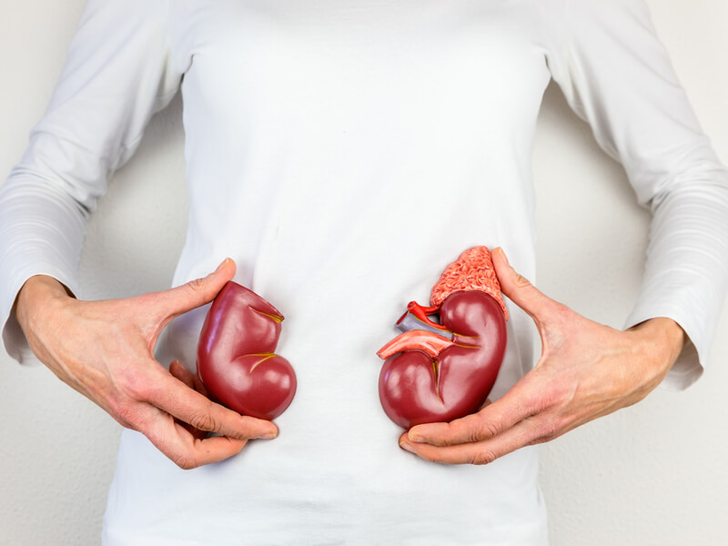 Organspende: Frau hält Nierenmodelle vor ihren Bauch